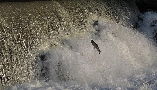 Fish-Jumping-Falls